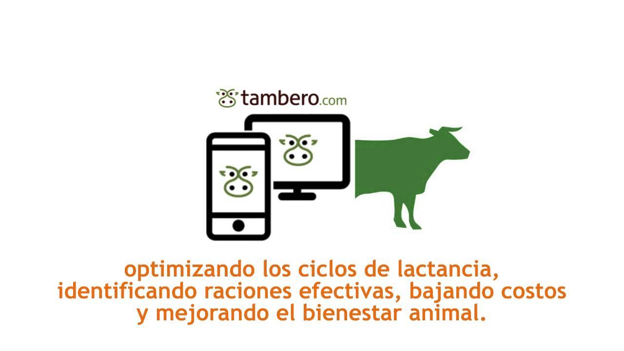 Una aplicación argentina para optimizar la ganadería