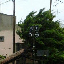 La Plata azotada por fuerte temporal