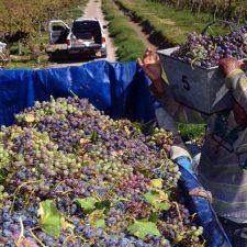El Gobierno asistirá a productores vitivinícolas sanjuaninos