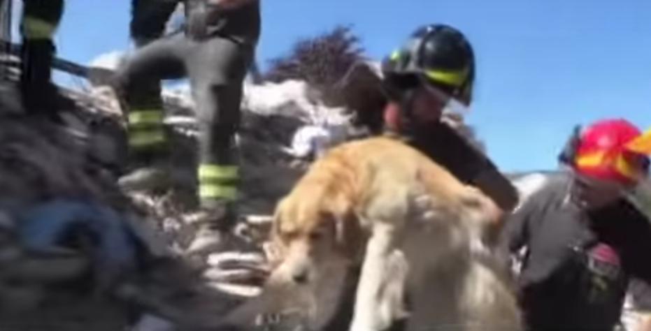 El perro que sobrevivió diez días en los escombros de Italia
